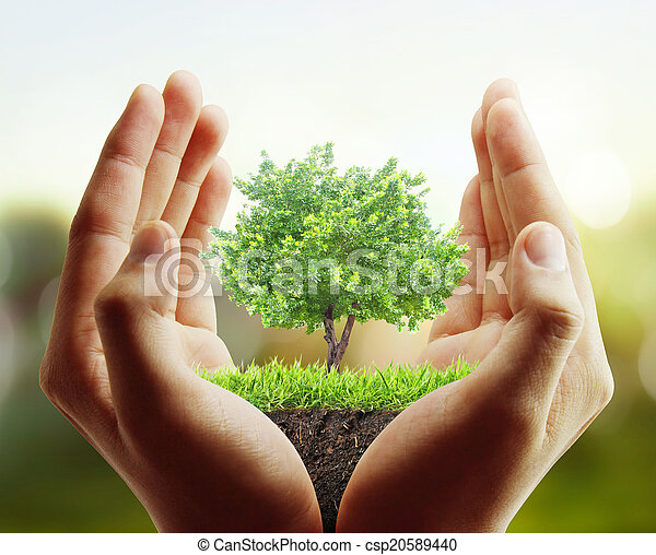 tree, plant in the hand  - csp20589440