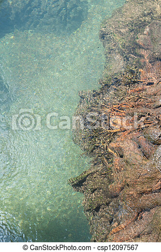 tree roots at Tapom two water canal in krabi, thailand - csp12097567