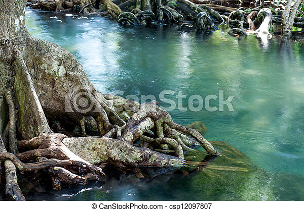 tree roots at Tapom two water canal in krabi, thailand - csp12097807