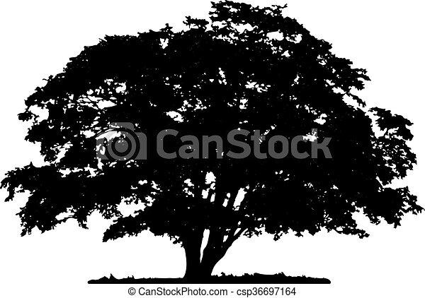 Tree silhouette - csp36697164