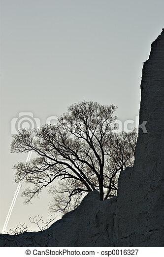 Tree silhouette - csp0016327