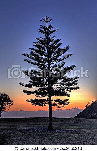 tree silhouette - csp2055218