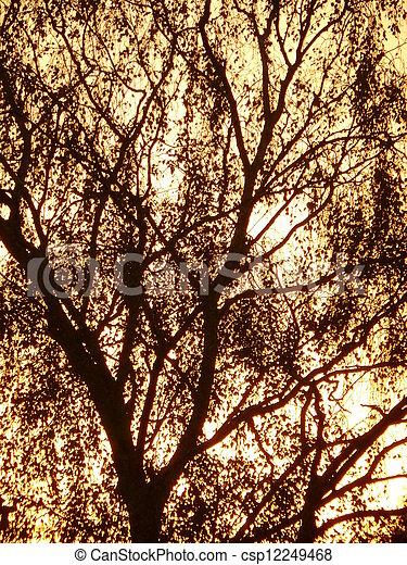 Tree Silhouette - csp12249468