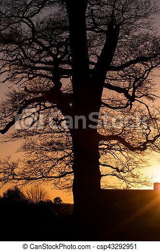 tree silhouette with sunset background - csp43292951
