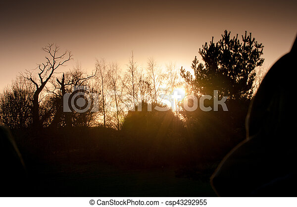tree silhouette with sunset background - csp43292955