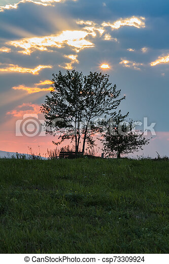Tree silhouette with sunset sky - csp73309924