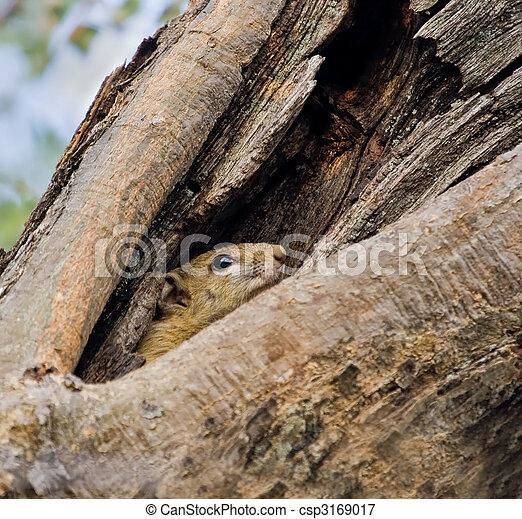 Tree squirrel - csp3169017