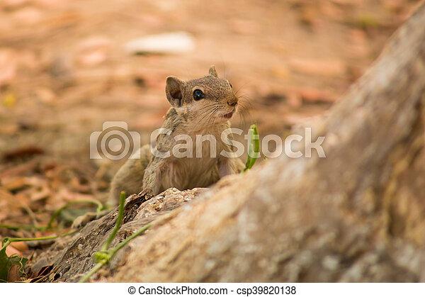 Tree Squirrel - csp39820138