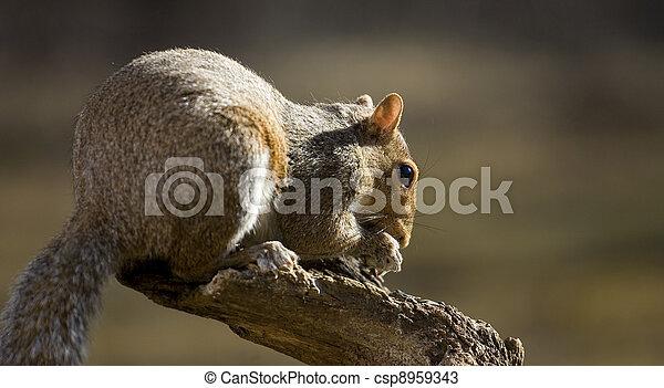 Tree squirrel - csp8959343