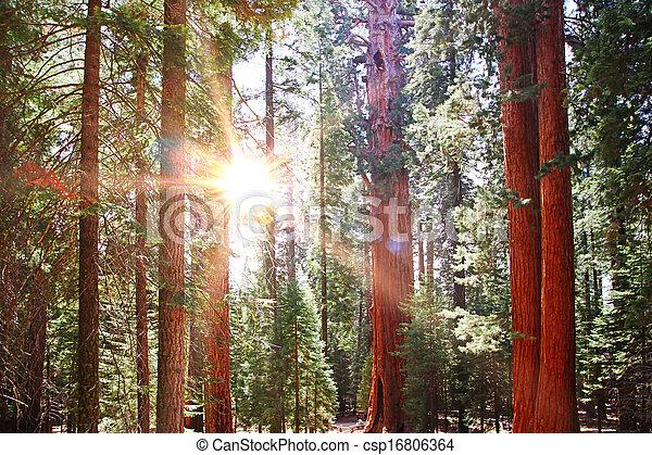 tree - csp16806364