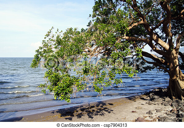 Tree - csp7904313