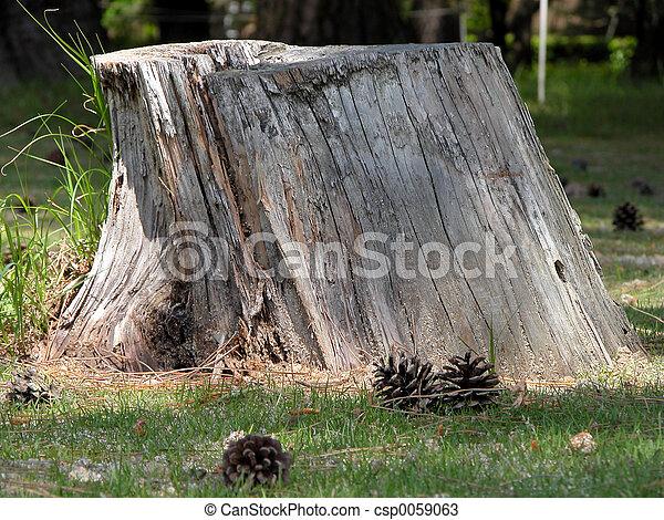 Tree Stump - csp0059063