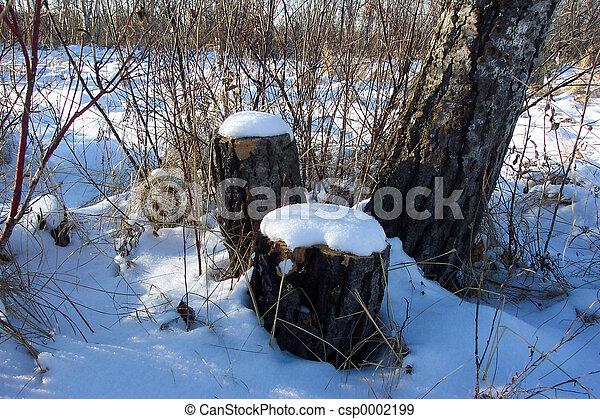 Tree stumps in snow - csp0002199