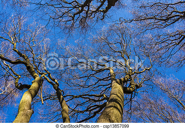 Tree tops in the forest. - csp13857099