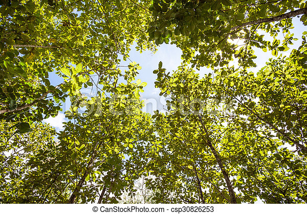 tree tops - csp30826253