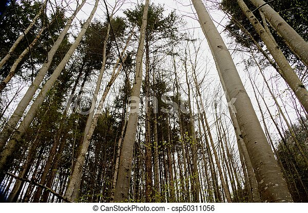 Tree Tops - csp50311056