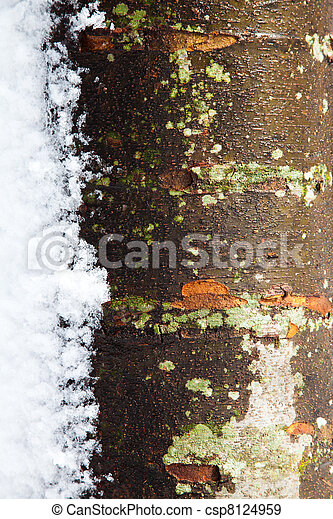 Tree Trunk in the Winter with Snow - csp8124959