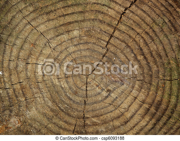 tree trunk section close up - csp6093188
