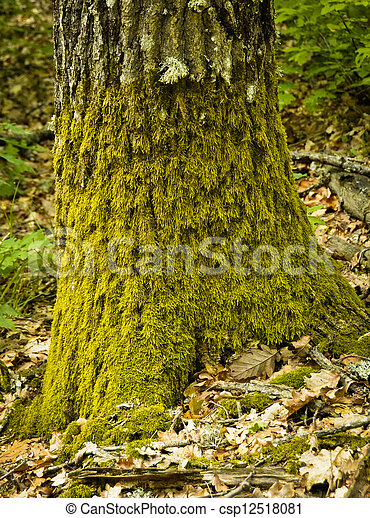 tree trunk with moss - csp12518081