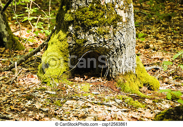 tree trunk with moss - csp12563861