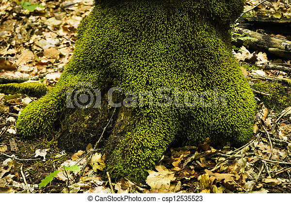 tree trunk with moss - csp12535523