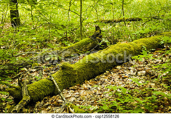 tree trunk with moss - csp12558126