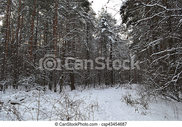 Tree trunks in winter forest - csp43454687