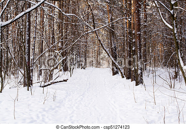Tree trunks in winter forest - csp51274123