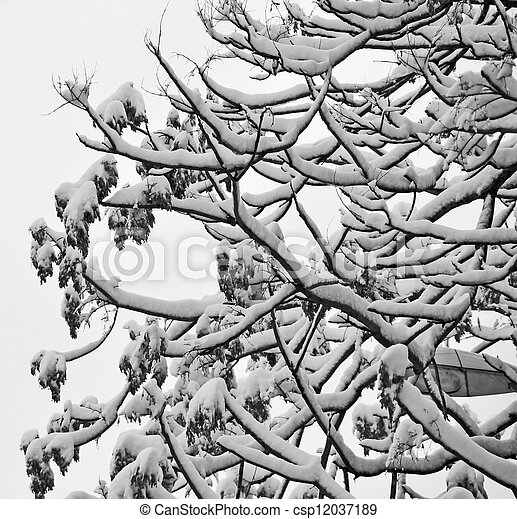 tree under snow in winter season - csp12037189