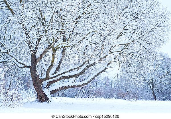 Tree under snow in winter time - csp15290120