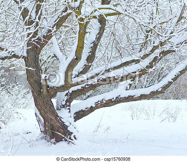Tree under snow in winter time - csp15760938