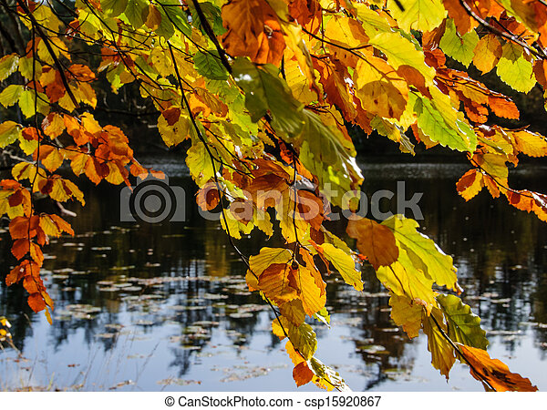Tree with Autumn Leaves by Lake - csp15920867