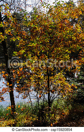 Tree with Autumn Leaves by Lake - csp15920854