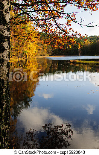 Tree with Autumn Leaves by Lake - csp15920843
