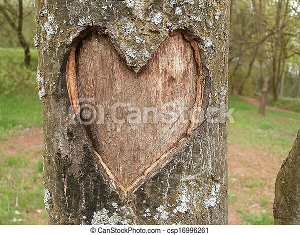 Tree with heart graven in bark - csp16996261