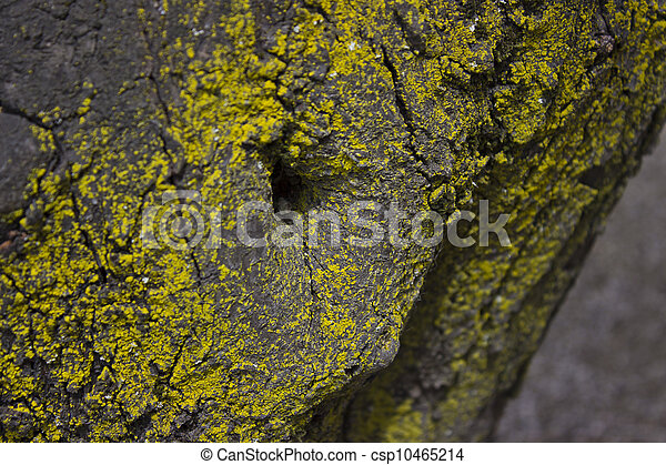 Tree with Moss - csp10465214