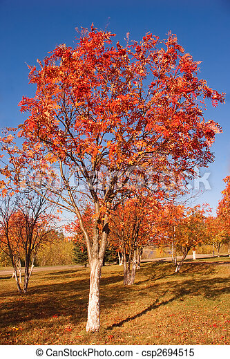 Tree with red leaves - csp2694515