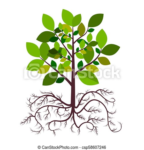 Tree with Roots Vector - csp58607246