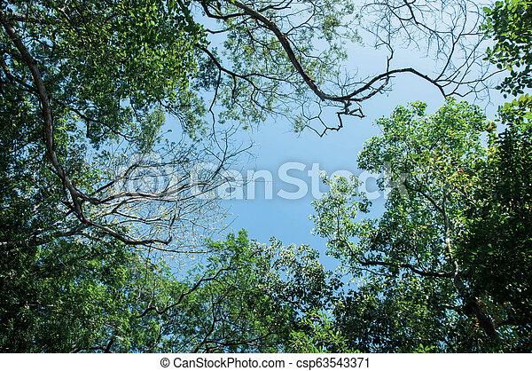 Tree with Sky - csp63543371