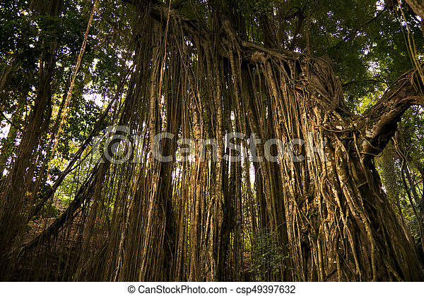 Tropical Trees and dry ivies forest textured background.