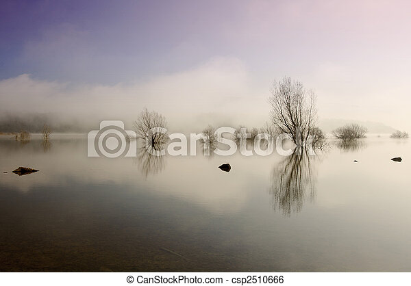 Trees and lake with reflections - csp2510666