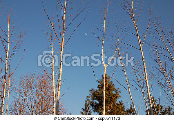 Trees and Moon - csp0511173