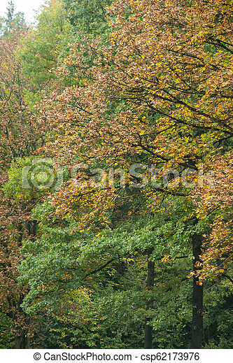 Trees And Shrubs In Beautiful Autumnal Colors