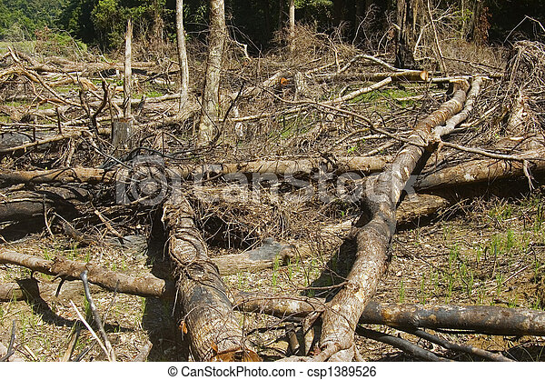 Trees are slashed and burned to give way to farming - csp1389526
