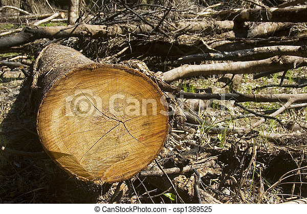 Trees are slashed and burned to give way to farming - csp1389525