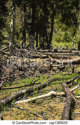 Trees are slashed and burned to give way to farming - csp1389530