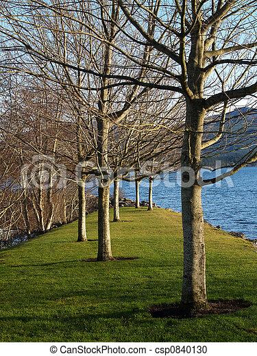 trees at the marina - csp0840130