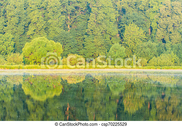 Trees by the river at sunrise summer time. - csp70225529