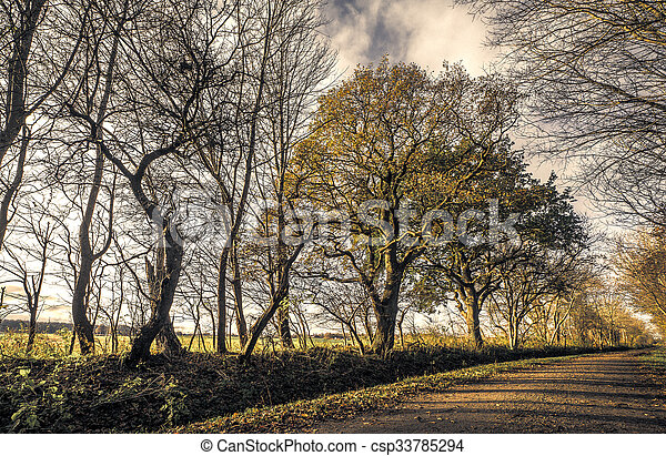 Trees by the road in a forest - csp33785294