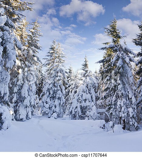 Trees covered with hoarfrost and snow in mountains - csp11707644